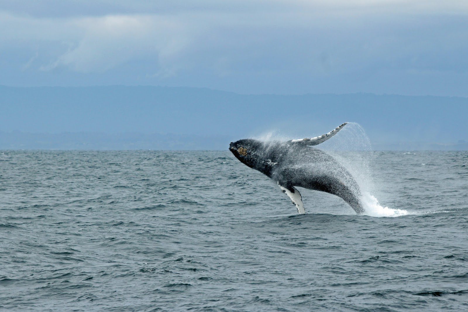 image for article There Is Always Hope: How Monterey Bay Came Back From the Brink