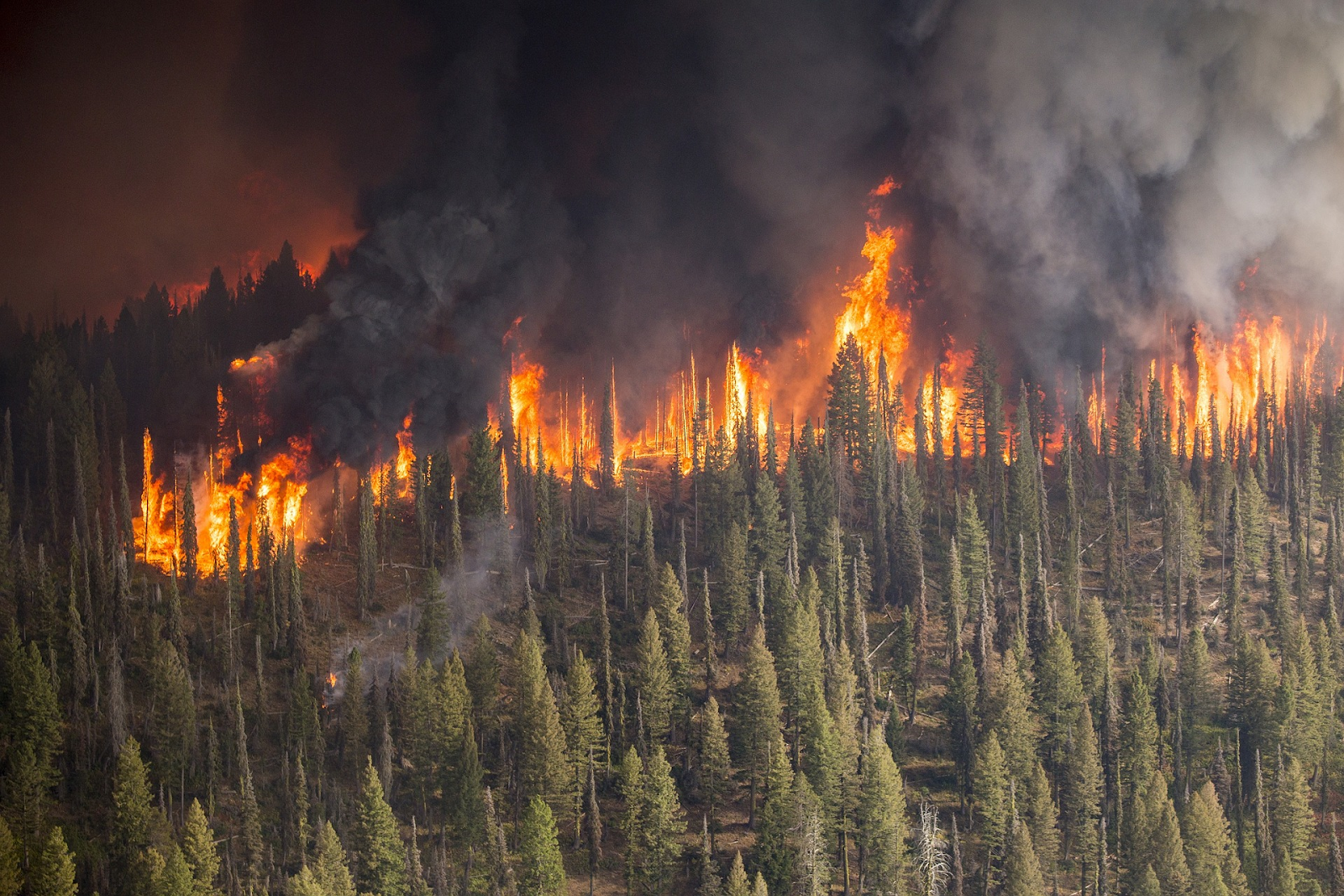 Wildfire consuming a forest.