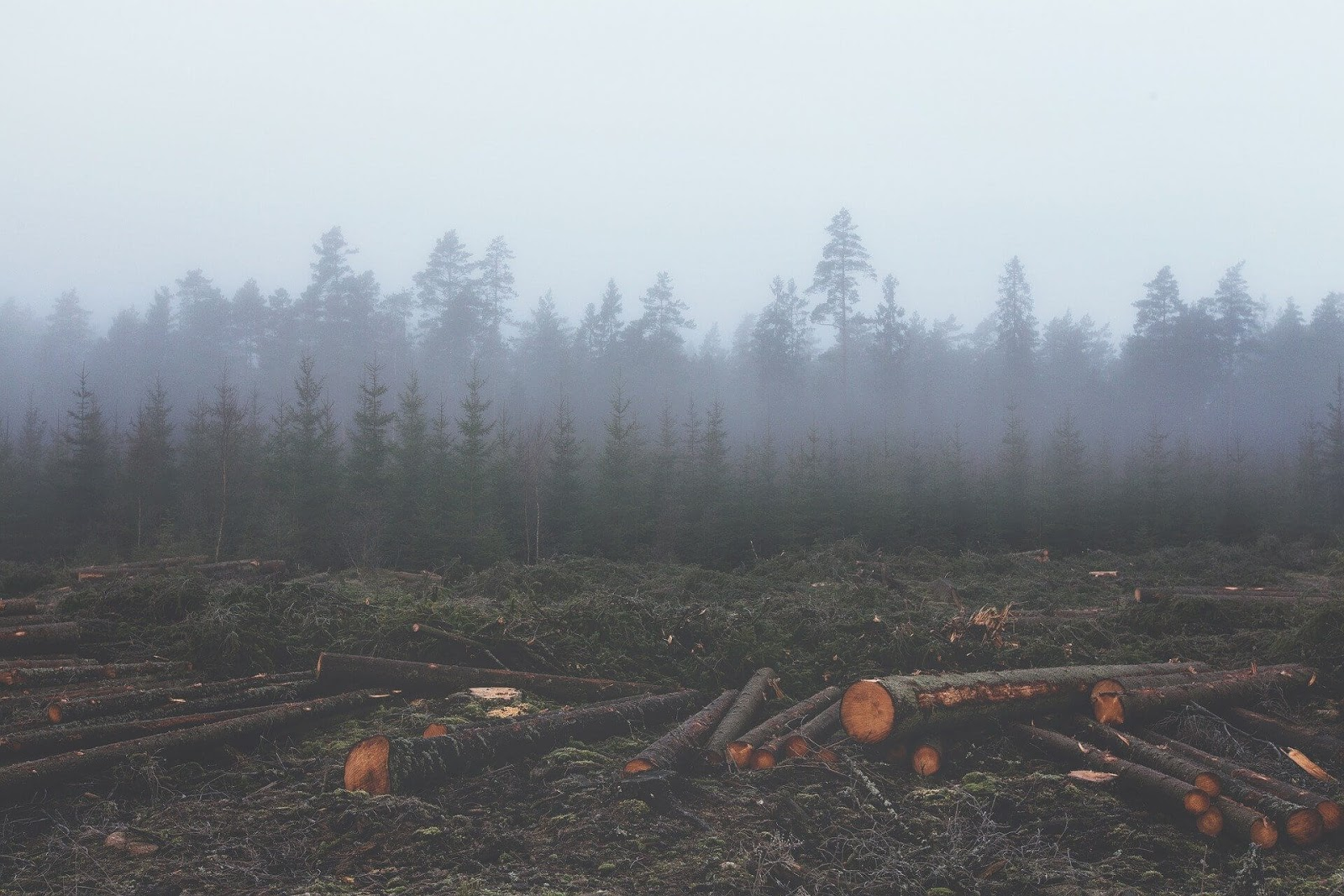 Felled logs in front of a forest