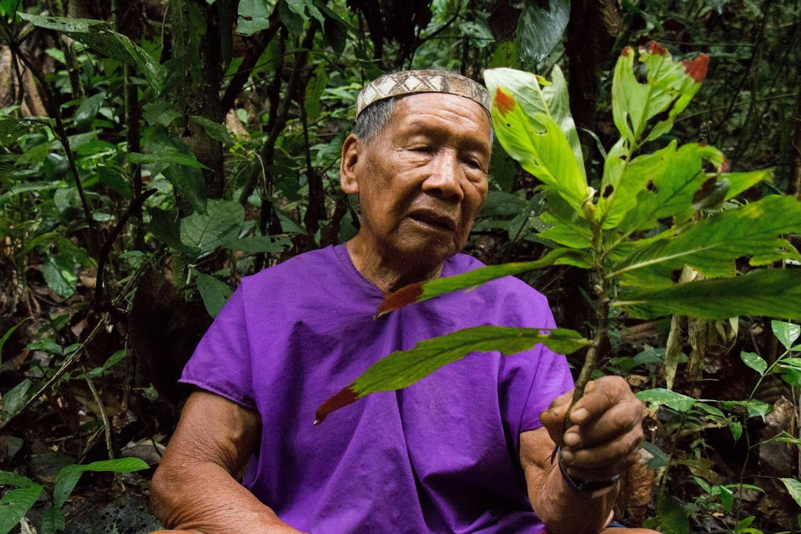 Siekopai elder with medicinal plant.