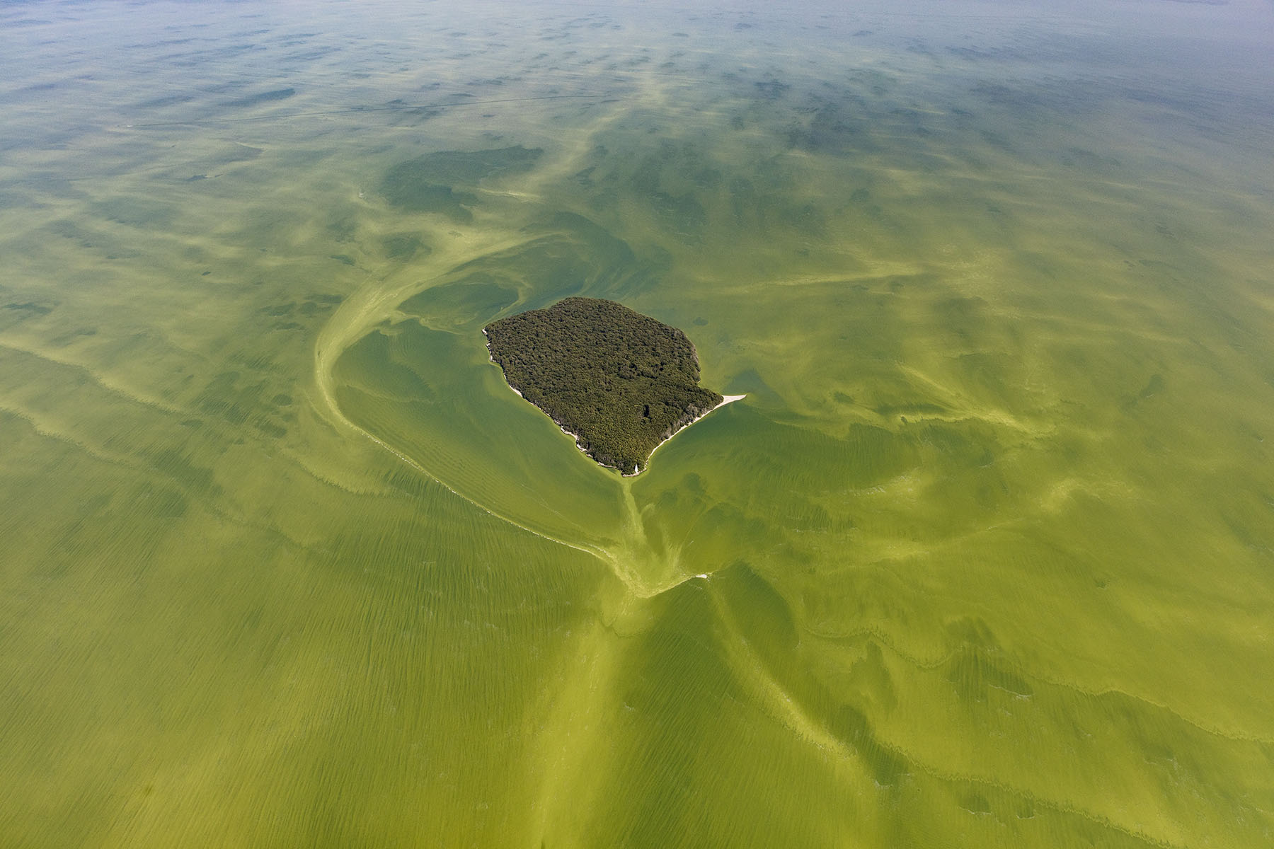 image for article The Poisoning Of Lake Erie: A Case for Granting Rights to Nature